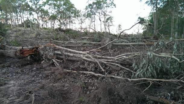 Land Clearing Spells Bad News for Squirrel Gliders and Lakes! - 26 Jan 15
