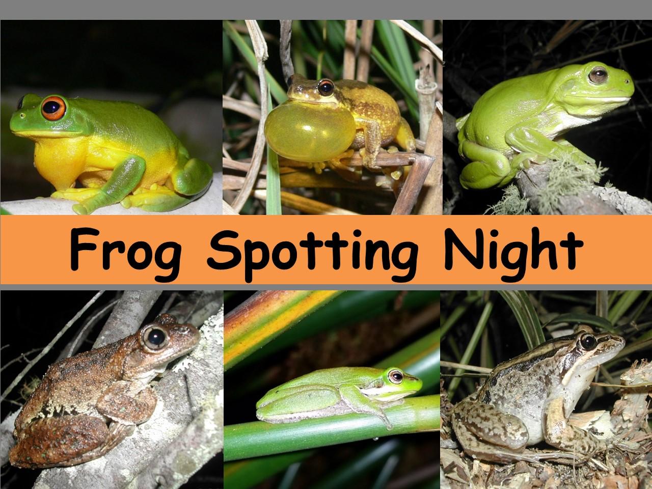 2021 Frog Spotting night